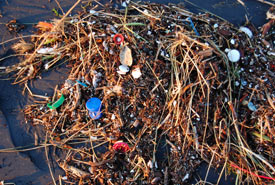 Plastic waste is often seen washed up on shorelines (Photo by Kevin Krejc/Wikimedia Commons)