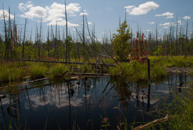 Prime habitat for dragonflies and damselflies. (Photo by Leanne Gauthier-Helmer)