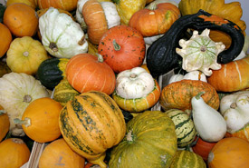 Pumpkins (Photo by Nino Barbieri, Wikimedia Commons)
