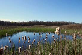 A restored wetland in Norfolk, ON (Photo by NCC)