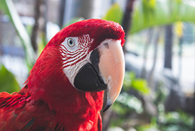 Scarlet Macaw (Photo by Maritza, Pexels)