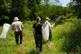 Bénévoles à la recherche de libellules, Alvar Carden, Ont. (Photo de Leanne Gauthier-Helmer)