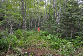 A shell midden site, deep in the forest on NCC property. These sites are typically  treeless, making them easier to locate in the dense forest. (Photo by Matthew Betts/Canadian Museum of History)