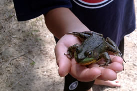 Simon the frog-catcher (Photo by Erica Thompson/NCC staff)