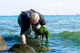 Dr. Sophie Steinhagen collecting seaweeds (Photo courtesy of Dr. Sophie Steinhagen)