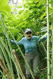 Staff standing under a stand of giant knotweed (Photo by NCC)