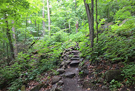 Some stairs built by NCC interns last summer on the property's main hiking trail (Photo by NCC)