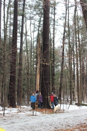Ontario's tallest pine (Photo by NCC)