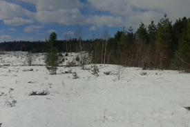 Stewardship progress on the Rice Lake Plains, ON (Photo by NCC)