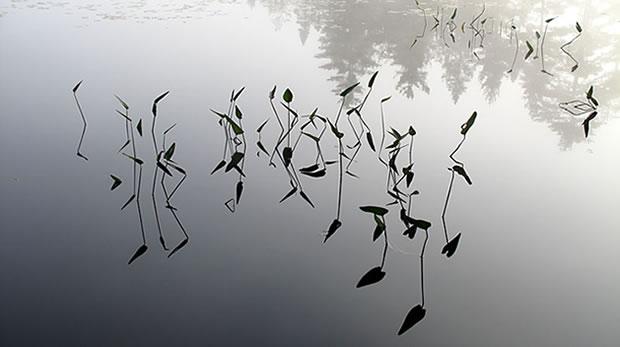 Still waters (Photo by Doug Van Hemessen)