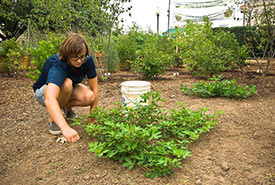 Tending a community garden (Photo by Bob Nichols/US Department of Agriculture, Wikimedia commons)