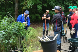 Todd Farrell teaches volunteers how to plant trees at Happy Valley Forest, ON (Photo by Mimi Chan)