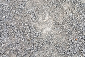 Tracks of a coyote running full out (Photo by Mark Stabb/NCC staff)
