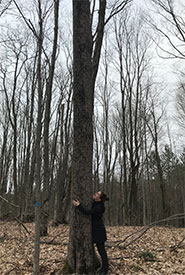 NCC staff Laura Vaughan hugs an endangered butternut tree at East Coulson Swamp. (Photo by NCC)