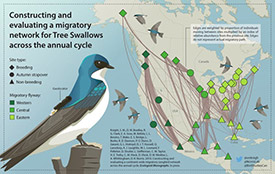 The tree swallow migratory network described in Knight et al. 2018 (Poster by Norris Lab)