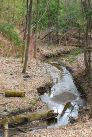 Tributary of the Don River running through the valley (Photo by NCC)