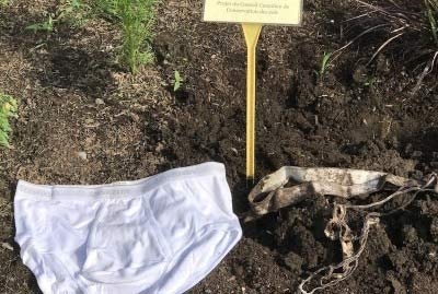 Left: new undies; right: official SCCC undies dug up at the Canada Agriculture and Food Museum in Ottawa, ON (Photo by CNW Group/Soil Conservation Council of Canada)