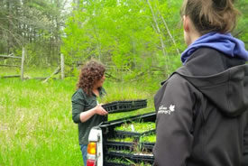 Val Deziel distributes a flat of wild rye for planting (Photo by NCC)