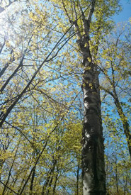 My view from the hammock on a recent trip to Awenda Provincial Park (Photo by Cara Copeland/NCC staff)