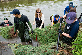 Volunteers working to put the bends back into Willow Creek. (Photo by Miguel Hortiguela)