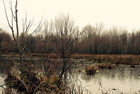 Wetlands simultaneously release methane, while carbon is taken up by plants and stored in wetland soils. (Photo by Amanda Loder)