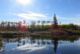 Wetland at the Kallal property, AB (Photo by NCC)