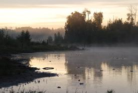 Milieu humide, Collines Beaver, Alb. (Photo de la Beaver Hills Initiative)