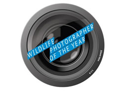 Wildlife Photographer of the Year (Image by Royal Ontario Museum)
