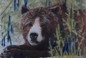Grizzly bear (Painting by David Arrigo) represents one of the several Canadian animals you can sponsor this holiday season.