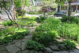 A woodland garden in a front yard (Photo by Lorraine Johnson)