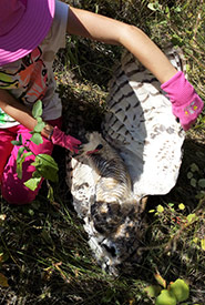The dead owl we came upon (Photo courtesy of Zoe Saranchuk)
