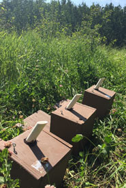 Three bee boxes built by Conservation Volunteers lined up before being nested into the ground. (Photo by NCC)
