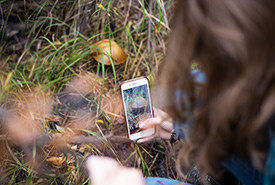Volunteer capturing data with a smartphone at a NCC BioBlitz event (Photo by Brent Calver)