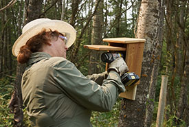 A volunteer installs bluebird boxes around Gambling Lake, AB (Photo by NCC)