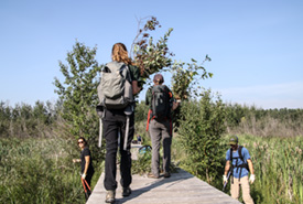 Conservation Volunteers keeping the boardwalk clear at Clifford E. Lee Nature Sanctuary (Photo by NCC)