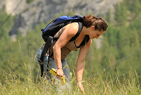Collecting seeds to help enhance rare native plant populations in BC. (Photo by NCC)