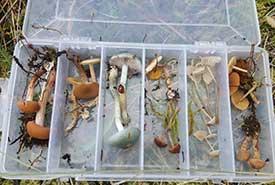 Mushroom samples (Photo by Laura Andrews)