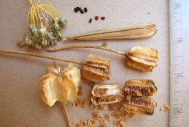 A collection of various seeds (Photo by NCC)