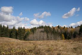 Fescue Prairie, Elk Glen (Photo by NCC)