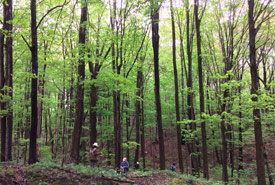 Conservation Volunteers removing garlic mustard from Happy Valley Forest, ON (Photo by NCC)