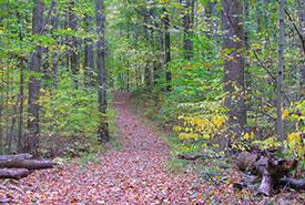 Backus Woods (Photo by NCC)