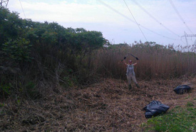 During phragmites removal, Kristen Glass shows she won't be defeated! (Photo by Megan Quinn)