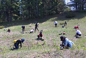 Des bénévoles plantent des fleurs sauvages indigènes à la réserve naturelle Hazel Bird, Ont. (Photo de CNC)