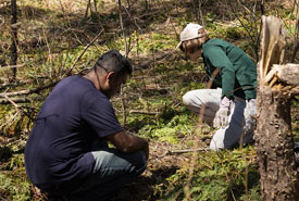 Volunteers pulling garlic mustard at Severn Woodland Nature Reserve, ON. (Photo by Nicole Evelyn Senyi)