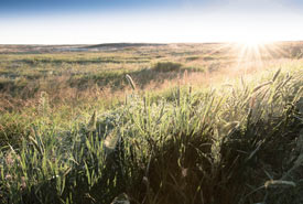 Morning sun shines on the grassy plains at OMB (Photo by Gail F. Chin)