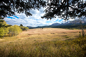 Jim Prentice Wildlife Corridor Oelke property in the Crowsnest Pass, AB (Photo by Brent Calver)