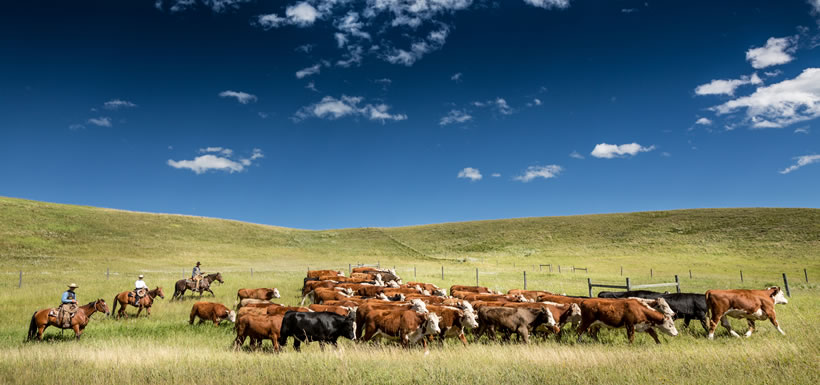 Ranchers at Waldron, AB (Photo by Kyle Marquardt, kylefoto.com)