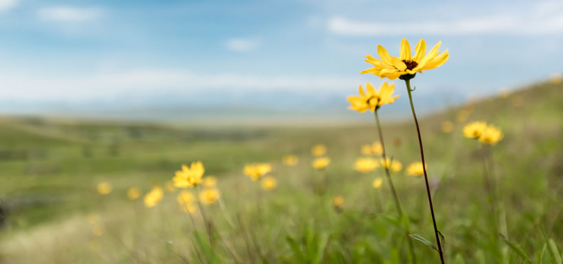Wildflowers at Waldron, AB (Photo by Kyle Marquardt, kylefoto.com)