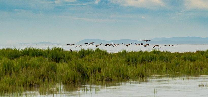 Canada geese (Photo by Fernando Lessa)