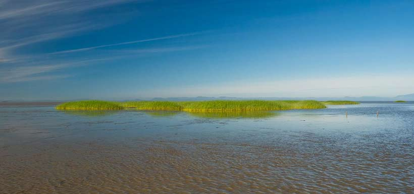 Marsh vegetation is a key structure buffering against sea level rise created by climate change. (Photo by Fernando Lessa)